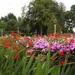 Siertuin de Springertuin - bloemenveld